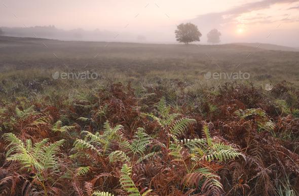 misty sunrise over fern leaves - Stock Photo - Images