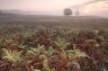 misty sunrise over fern leaves - PhotoDune Item for Sale