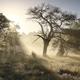 beautiful sunbeams at misty sunrise behind tree - PhotoDune Item for Sale