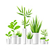 Realistic Detailed Green Houseplant Pot - GraphicRiver Item for Sale