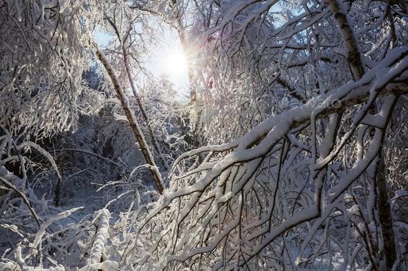 Frozen tree - Stock Photo - Images