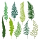 Flat Vector Set of Different Types of Fern.