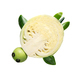 Vegetable turtle. - PhotoDune Item for Sale