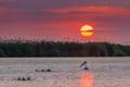 Danube Delta, Romania - PhotoDune Item for Sale
