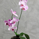 pink orchid - PhotoDune Item for Sale