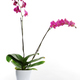 beautiful orchids - PhotoDune Item for Sale