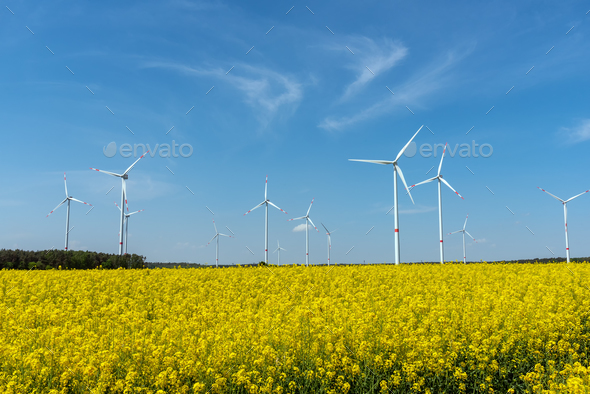 Yellow blooming oilseed rape and some wind energy plants - Stock Photo - Images