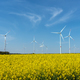 Yellow blooming oilseed rape and some wind energy plants - PhotoDune Item for Sale