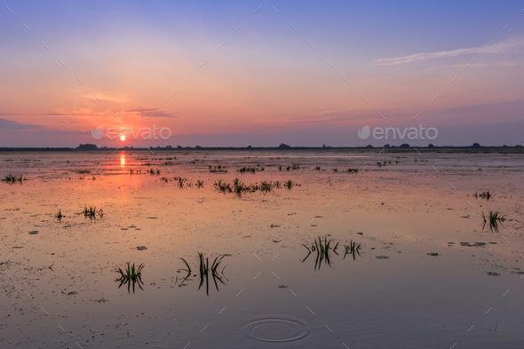 Danube Delta, Romania - Stock Photo - Images