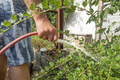 a man watering the garden plants - PhotoDune Item for Sale