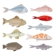 Flat Vector Set of Different Kinds of Fish