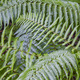 Fern leaves on a rainforest. Green environment. Lush foliage. Horizontal - PhotoDune Item for Sale