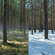 Summer To Winter Transition - VideoHive Item for Sale