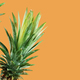 Pineapple on yellow background - PhotoDune Item for Sale