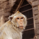Monkey of face in a zoo - PhotoDune Item for Sale