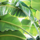 Banana leaves with sky - PhotoDune Item for Sale