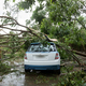 Broken tree fallen on top of parking car,damaged car after super typhoon   - PhotoDune Item for Sale