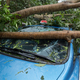 Broken tree fallen on top of parking car,damaged car after super typhoon Mangkhut in China  - PhotoDune Item for Sale
