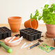 gardening, planting at home. sowing seeds in germination box - PhotoDune Item for Sale