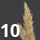 Collection of 10 Different Isolated Dry Grass Spikes Textures