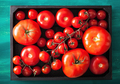 assorted tomatoes in wooden box - PhotoDune Item for Sale