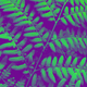 Fern Backgrounds