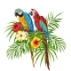 Illustration of Macaw Parrots