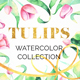 Tulips Watercolor Collection