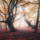 Beautiful fairy forest in fog in autumn. Enchanted trees - PhotoDune Item for Sale