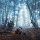 Mystical dark autumn forest with trail in blue fog - PhotoDune Item for Sale