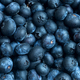 Fresh blueberries background with mist - PhotoDune Item for Sale