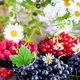 Fresh ripe summer berries - black currant in the foreground and - PhotoDune Item for Sale