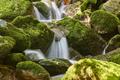 Water stream with mossy rocks in Muniellos Biosphere Reserve. Asturias - PhotoDune Item for Sale