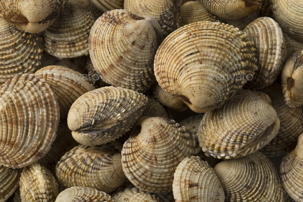 Fresh raw warty venus clams - Stock Photo - Images