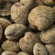 Fresh raw warty venus clams - PhotoDune Item for Sale
