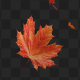 Maple Leaf 02 - VideoHive Item for Sale