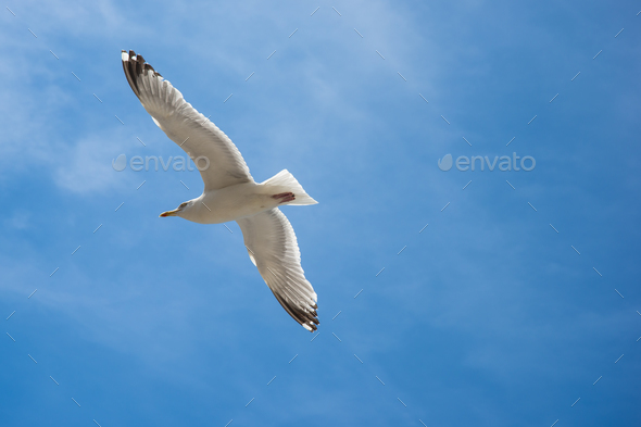 Seagull are flying in the blue sky and clouds background - Stock Photo - Images