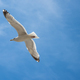 Seagull are flying in the blue sky and clouds background - PhotoDune Item for Sale