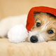 Christmas pet dog with Santa Claus hat - PhotoDune Item for Sale
