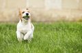 Smiling happy pet dog puppy playing with a ball - PhotoDune Item for Sale