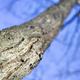 Tree trunk and bark with blue sky - growth concept - PhotoDune Item for Sale