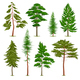Realistic Pine Trees Set