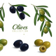 Realistic Olives Branches Set - GraphicRiver Item for Sale