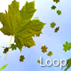 Maple Leaves - VideoHive Item for Sale