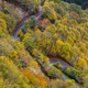 Road through the Autumn Forest - PhotoDune Item for Sale