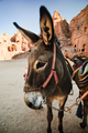 Donkey - PhotoDune Item for Sale