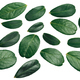 Lingonberry vaccinium vitis-idaea leaves, top - PhotoDune Item for Sale