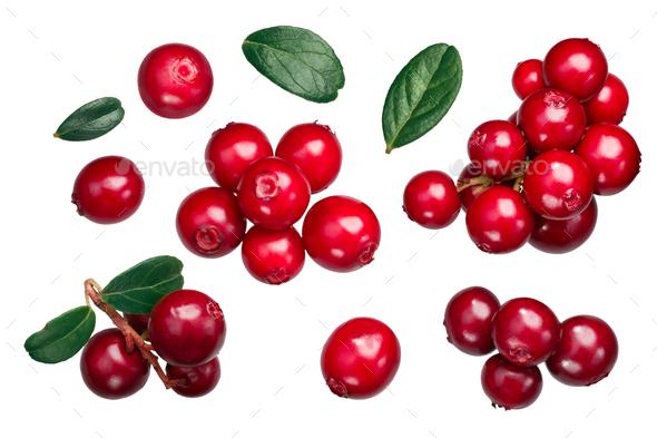 Lingonberry vaccinium vitis-idaea, paths, top - Stock Photo - Images