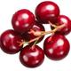 Lingonberry vaccinium vitis-idaea, cluster, paths - PhotoDune Item for Sale