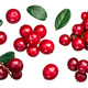 Lingonberry vaccinium vitis-idaea, paths, top - PhotoDune Item for Sale